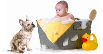 A dog watches a baby in a bath tub because baby in a bathtub needs constant supervision