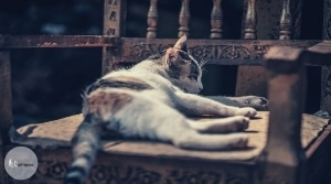 Cat Is Sleeping On A Wooden Chair
